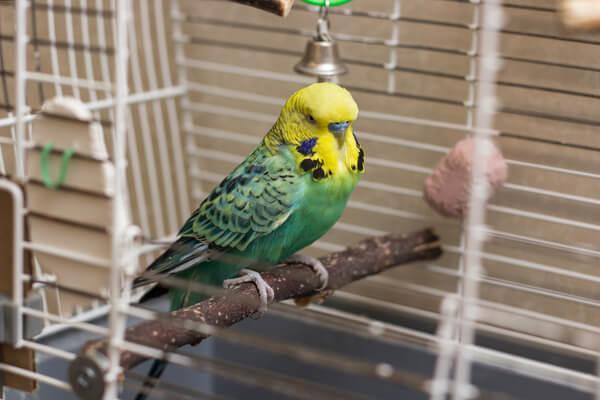 Vogel in kleinem Vogelkäfig