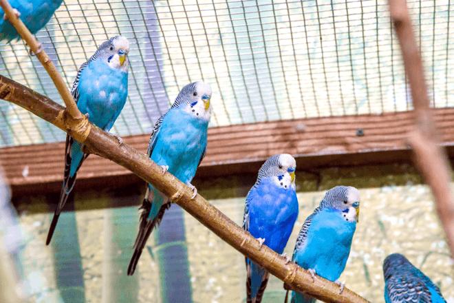 Vogelkäfig in Groß
