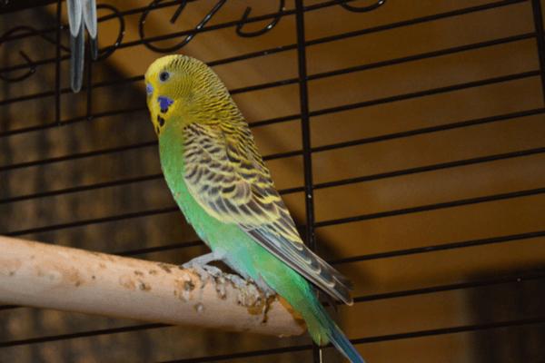 Vogelkäfig klein