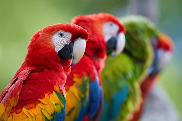 vogelkäfig volieren