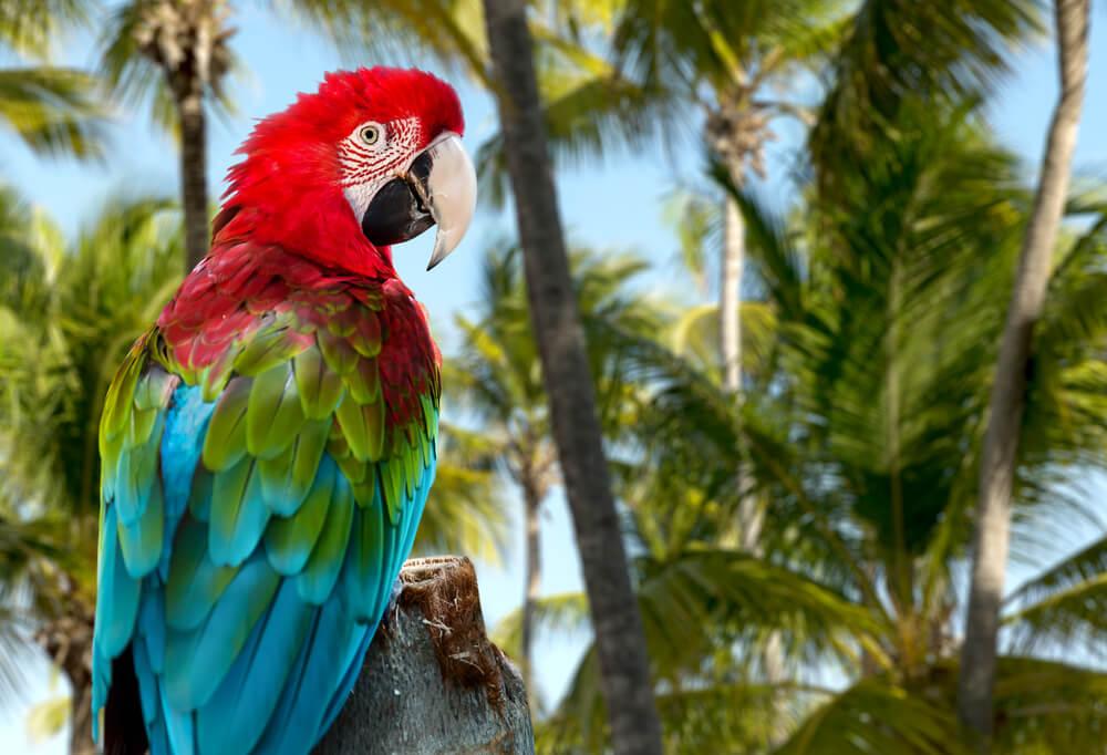 Papagei mit Palmen