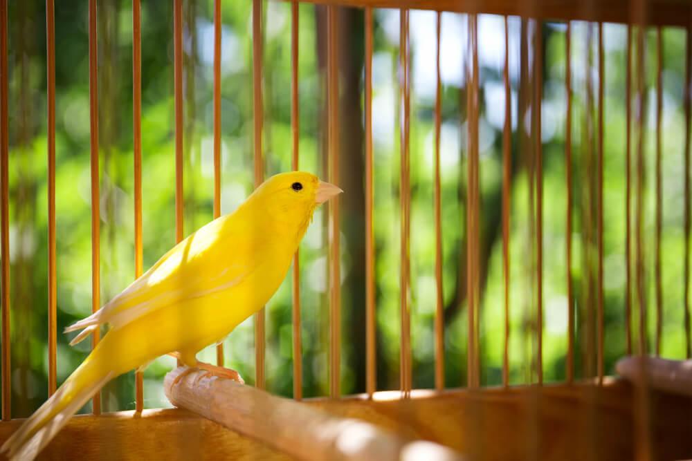 Vogel im Vogelkäfig aus Holz