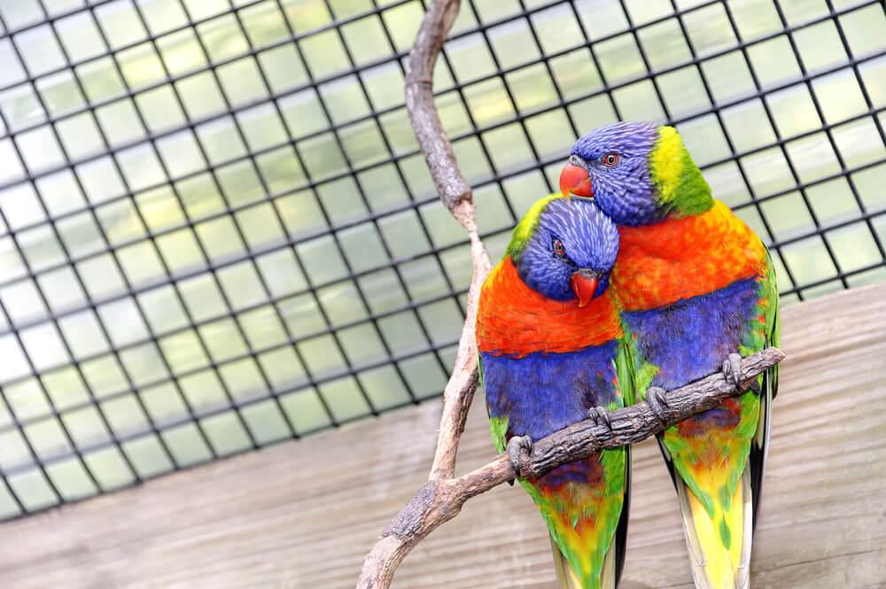 Papageien im Papageienkäfig