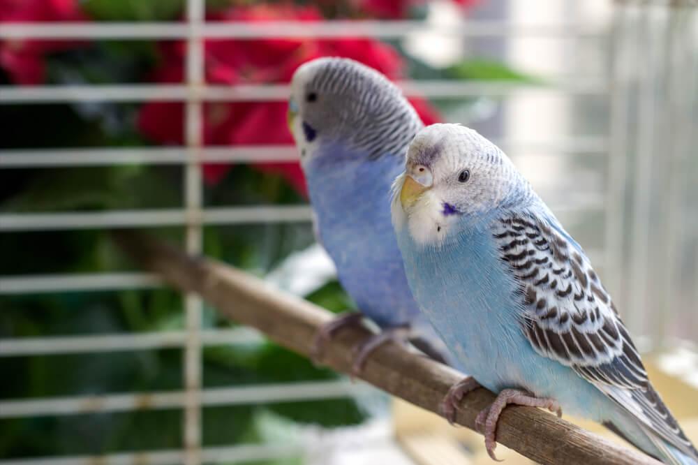 Vögel in Schwarzem Vogelkäfig