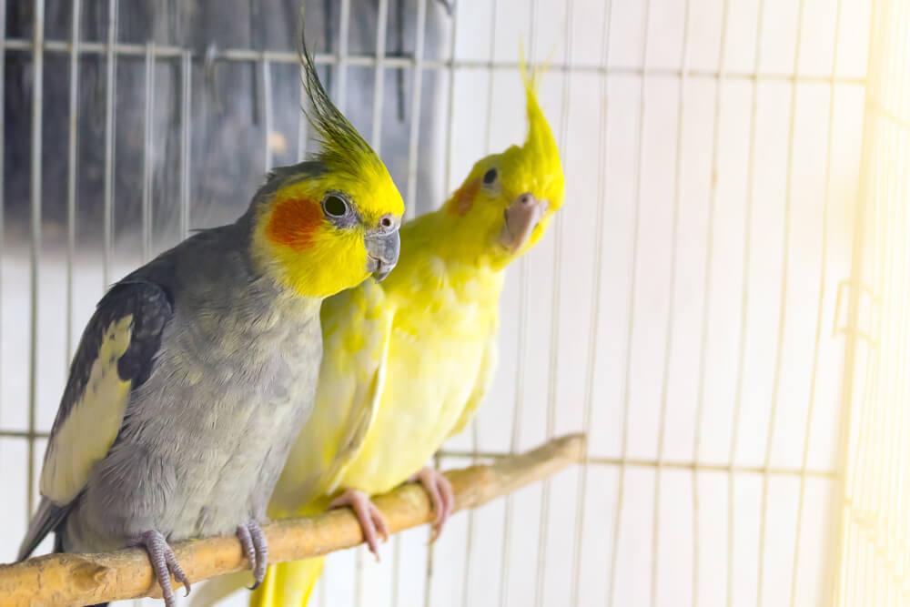 Zwei Vögel auf einer Sitzstange