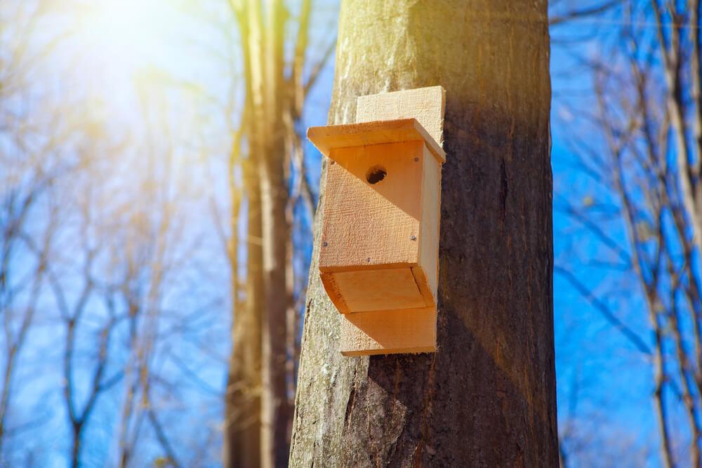 Ein Vogelhaus Nistkasten am Baum