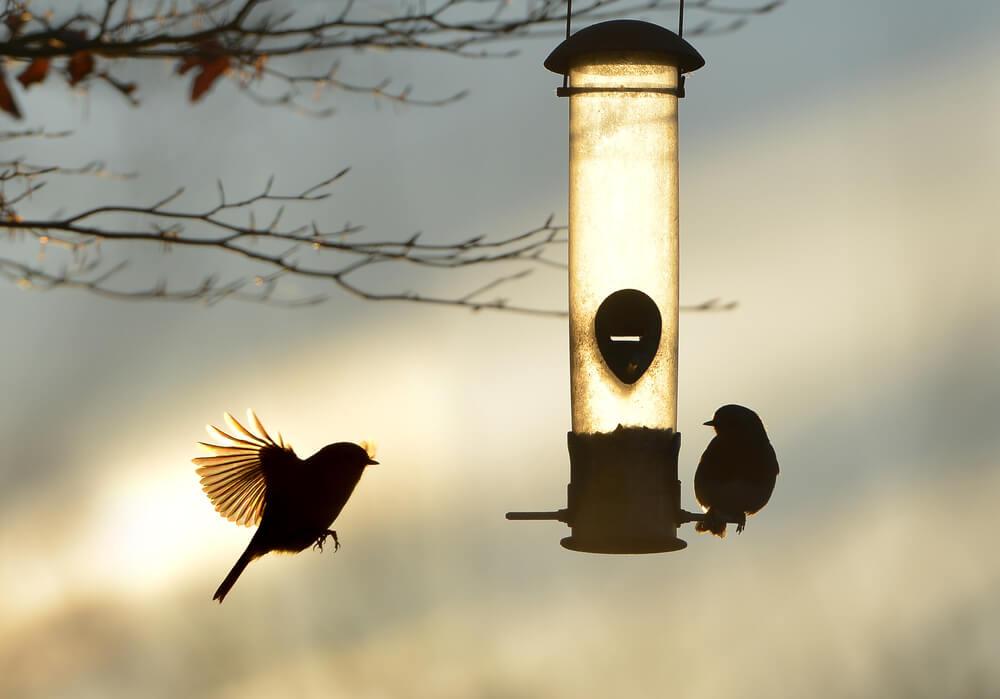 Vogelhaus aus Edelstahl mit Vögeln